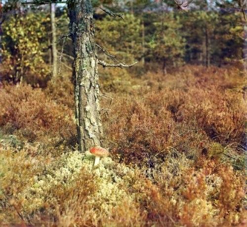 Among the moss