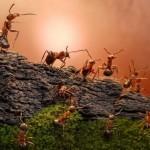Andrei Pavlov – Ant Stories