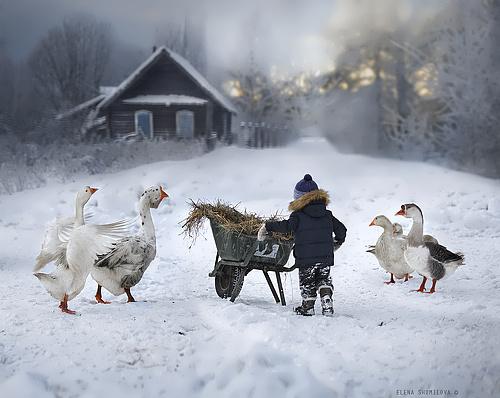 Shumilova Elena photographer