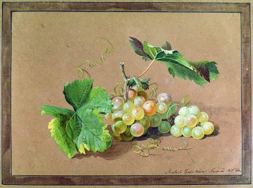 The branch of grapes Fedor Tolstoy