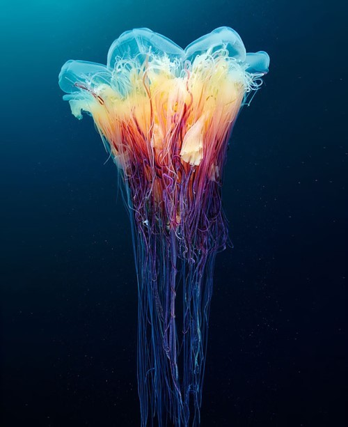 Jellyfish can be so amazing