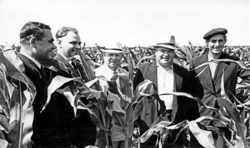 N.S. Khrushchev in the corn fields near Orel, 1962