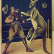 Kangaroo-boxer Performance by Durov